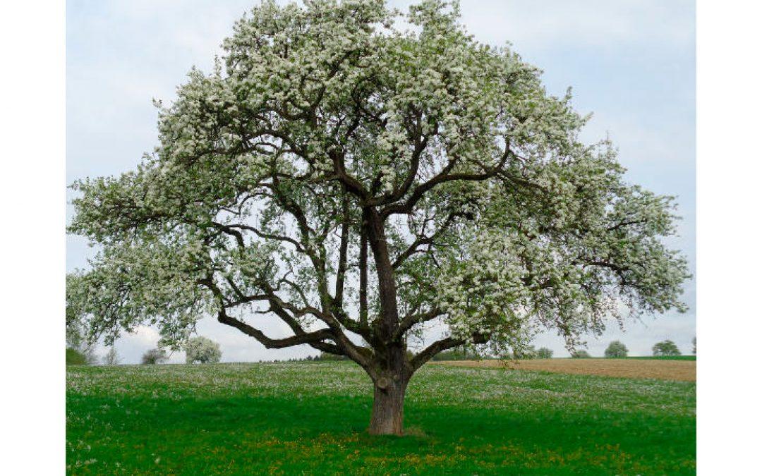 FÜR MICH – Mit dem Selbstwertbaum wachsen und aufblühen